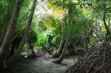 Selva w okolicy Tulum