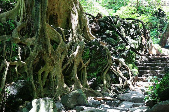 Droga do piramidy, jak las u Tolkiena