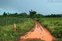 Po przechadzce taką drogą szczotka ryżowa jest niezbędna, by doprowadzić się do porządku (chyba że ma się kalosze;))