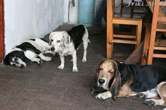 Sjesta jest ważna - psy z Oaxaca