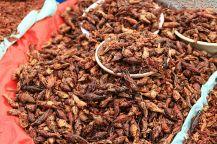 Chapulines - świerszcze, specjał z Oaxaca