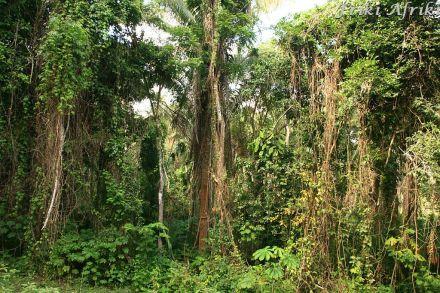 Bujna roślinność lasow deszczowych
