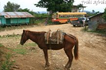 Koń i autobus - podstawowe środki transportu w Toledo