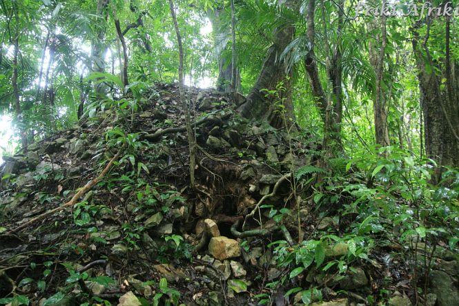selwa koło Palenque - ruiny pochłaniane przez przyrodę