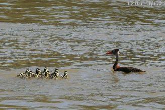 Na rzece Usumacincie