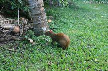 Taki stwór w Tikal